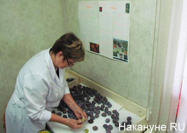 http://www.nakanune.ru/admin/images/pictures/image_big_68333.jpg