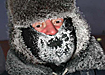На прямой связи - Дед Мороз: Аналитика
